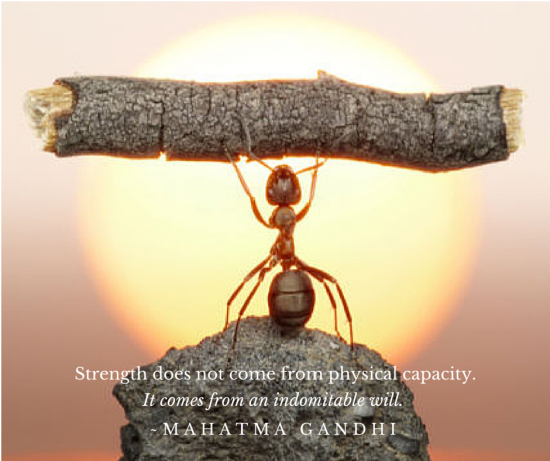 The Power of Will Gandhi quote