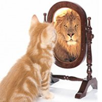 3 Ways Talking to Yourself Will Improve Volleyball Performance Lion